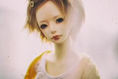 happy birthday, ninomiya! (karmadekarmade) Tags: bjd doll ninomiya zaoll luv