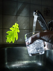 Elv. (Nuutti N.) Tags: oak leave water sink original levitate drink studiophotography amateur fresh