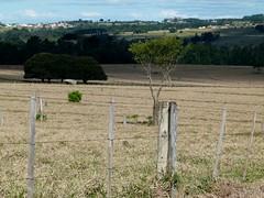 (IgorCamacho) Tags: campo field agricultura agriculture southern brasil brazil suldobrasil paran natureza nature winter inverno shadows sombras