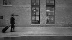 Traveler 1 (michael.veltman) Tags: from a cab in the rain chicago illinois traveler umbrella building monochrome