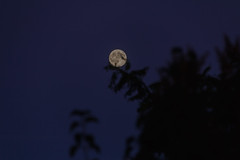 Full moon light (jc.mendo) Tags: jcmendo canon 7d tamron 18270 luz luna llena full moon light