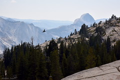[Overlooking toward Half Dome from Olmsted Point] (miltonsun) Tags: olmstedpoint yosemitenationalpark halfdome landscape mountains westcoast