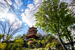 DSC01374 (Damir Govorcin Photography) Tags: trees sky clouds chinese gardens darling harbour sydney zeiss 1635mm sony a7ii