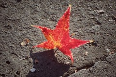 Espectculos de la naturaleza (Mcloe_lee) Tags: rojo red sombra shadow shadows hoja naturaleza nature maana otoo high light libertad