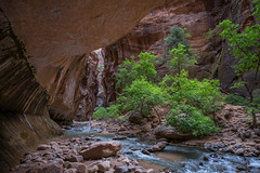 The Narrows (Dave Chiu) Tags: thenarrows zionnationalpark utah