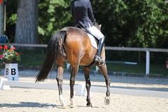 IMG_7699 (dreiwn) Tags: dressage dressur dressuur pferd reitturnier turnierreiten pferdesport horse horseback horseriding equestrian reitverein dressurprfung kandare doublebridle reiten pferde reitplatz ridingarena