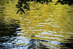 Water reflection (Maria Eklind) Tags: malm nature vatten spegling sweden outdoor europe water reflection skneln sverige se