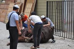 DSC_0009 () Tags: musulmani moschea xian cina festival sacrificio mucca pecora beef sacrifice china mosque