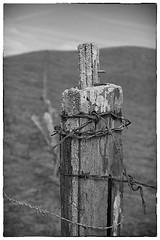 55.1.2.SC.FencePostBarbedWireSEP (CurtisGrindahl) Tags: 55f12sc fenceline nicasio westmarin