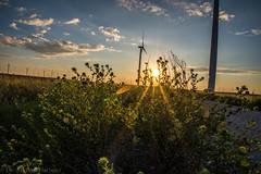 West Texas Morning (6 of 40) (mharbour11) Tags: wildcats elk purple sunrise westtexas texas sky windturbines windmill sun silhouettefire silhouette