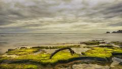 Moss & wood (BAN - photography) Tags: cloud sea rocks moss pools headland longexposure d500 byronbay thepass driftwood