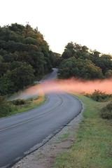 In The Road (vick28658) Tags: blueridgeparkway road northcarolina trees sunrise fog thunderhilloverlook
