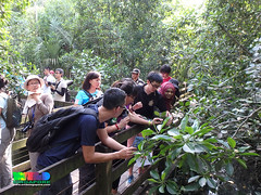 Mangrove flora workshop, Sep 2016: field session at Pasir Ris (wildsingapore) Tags: people guiding pasir ris park mangroves pulau ubin island singapore marine coastal intertidal shore seashore marinelife nature wildlife underwater wildsingapore landscape