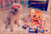 trick or treat !! (girl enchanted) Tags: red dog ikea halloween glass puppy toy doll shelf poodle kenner blythe doggy pup 1972 toyroom colelction dollyroom