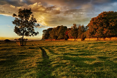 Autumnal Sun, Seamer Near Scarborough (mark_mullen) Tags: uk autumn trees england sunlight rural painting landscape countryside colours seasons warmth scarborough autumnal northyorkshire goldenlight johnconstable canon1740 seamer canon5dmk3 markmullenphotography