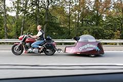 Another 55 (Michael Ast) Tags: highway commute motorcycle commuter rushhour interstate funnydog turnpike buckscountypa buckscounty pennsylvaniaturnpike paturnpike motorcyclist tollroad i276 motorcycletrailer passengerwindow dogtrailer tollrd