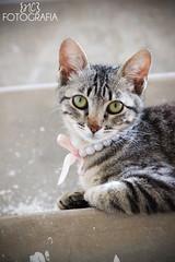 Nahla (Natália Corrêa Fotografia) Tags: pet white black cute animal cat canon hamster t3i