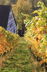 Vineyard (:Linda:) Tags: abbey germany vineyard monastery halftimbered weinberg fachwerk pforte saxonyanhalt schulpforte schulpforta saaleunstrutwein