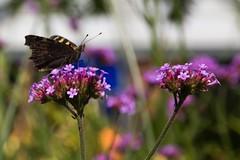 IMG_0114 (Lightcatcher66) Tags: florafauna makros blütenundpflanzen lightcatcher66
