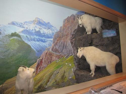 Arctic wolf diorama - photo#13