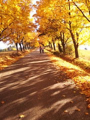 Autumn (odararod) Tags: autumn nature beautiful yellow photography photo beautifulshot