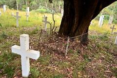 Memorial tree at Glenn Wills Cemetery (phunnyfotos) Tags: tree cemetery grave nikon cross headstone crosses headstones australia victoria graves vic sunnyside gippsland glenwills d5100 nikond5100 phunnyfotos glenwillscemetery