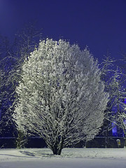 020 - Wadding flock (TFRARUG) Tags: trees winter light snow night magic neve inverno notte luce magia
