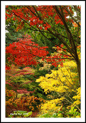 The Best Colours Of All Seasons? - Fall in Van Dusen Garden 8759e (Harris Hui (in search of light)) Tags: autumn trees red orange canada fall yellow vancouver garden gold fuji bc richmond fujifilm fallcolours vandusen s3pro vandusengarden fujis3pro sigma1770mm sigmazoomlens harrishui vancouverdslrshooter bestcoloursofallseasons