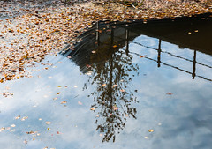 Autumnal reflections - Herfstspiegelingen (RuudMorijn-NL) Tags: wood november blue autumn sky orange brown haven abstract black reflection tree fall texture nature water netherlands beautiful beauty dutch leaves weather silhouette yellow closeup clouds fence season outdoors reflecting mirror golden canal leaf october colorful solitude blauw natural cloudy background seasonal herfst smooth floating wolken nobody boom fallen environment float breda centrum autumnal silhouet gracht hek lifecycle reflectie bladeren spiegelingen najaar herfstbladeren wolkenlucht wateroppervlak drijvende drijvend spiegelglad prinsenkade levenscyclus