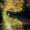 early morning swim (jjamv) Tags: uk bridge autumn trees england sky mountain reflection tree london nature water field alberi forest woodland river landscape boat canal swan lock path natura swans sentiero barge narrowboat hertfordshire canalboat bosco herts apsley sentieri thegalaxy 100commentgroup jjamv julesvtravel creativephotocafe juliusvloothuis