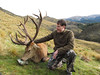 New Zealand Red Stag Hunting - Christchurch 51
