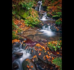 Autumn ... (w.mekwi photography [on the road]) Tags: nature water leaves rocks stream stones brook balloch valeofleven ballochcountrypark nikond90 nikkor18105mm wmekwiphotography