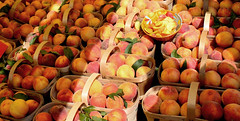 Peach Season (reena azim negi) Tags: morning light shadow summer food orange sun sunlight ontario canada hot color colour texture tourism nature fruits leaves sunshine yellow fruit rural booth outside baking healthy community warm day basket angle bright display farmersmarket market outdoor sale farm farming seasonal perspective peach craft sunny stall bowl canadian fresh eat health rows baskets northamerica multiple peaches vendor daytime summertime produce local samples stjacobs mothernature slices velvety vendors farmfresh northamerican nutrients drupes foodlandontario eatlocal waterlooregion woolwichtownship
