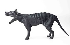 "Haruka Miyamoto, Tasmanian Tiger, 2011, leather, rubber, wire • <a style=""font-size:0.8em;"" href=""http://www.flickr.com/photos/77881881@N06/8147650553/"" target=""_blank"">View on Flickr</a>"