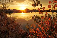 Painterly Autumn (NaturalLight) Tags: autumn sunset reflections gold cottonwood kansas wichita chisholmcreekpark ksccna7612