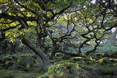 Old Gnarled Trees (Explored!) (JRT ) Tags: longexposure autumn sun leaves lights moss nikon branches peakdistrict tripod sunny magical atmospheric padleygorge d300s johnwarwood oldgnarledtrees