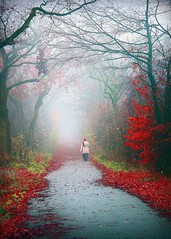 The Path (Mah Nava) Tags: autumn trees mist nature colors leaves fog forest germany deutschland nebel path herbst natur human wald bltter bume weg farben thepath