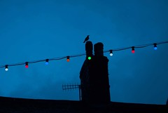 The whistling, or just after? (Kate Kirkwood) Tags: silhouettes nightlight xmaslights blackbird millom7087s