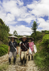 The Tea Pickers (syukaery) Tags: people female indonesia workers nikon tea plantation 20mm westjava sukabumi humaninterest citalahab halimun d700 bedeng