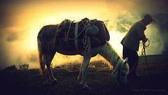 Life of Watchman (yusufyusuf85) Tags: horse caballo cheval flickr lifeofpi cal vote cavallo cavalo pferd kuda hest equus hevonen paard cavall  hst ceffyl   l ko arklys hestur perd  dinersclub zaldi k konj  kabayo evalo hobune cabalo    capall zirgs  iemel k  farasi   kal chwal nga  picasa3 yusufalioglu talenthouse removedfromstrobistpool unbornart yusufaliogluphotography nooffcameraflash seerule1      lifeofwatchman