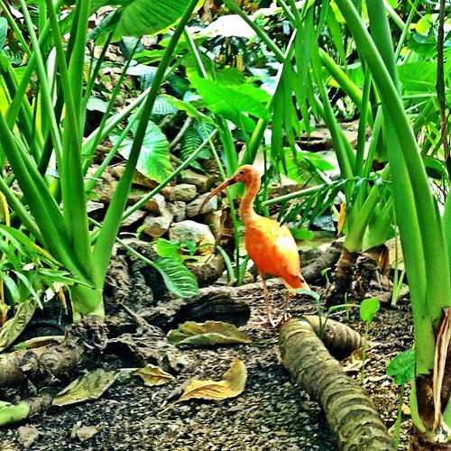 #beautiful #bird in the #zoo #greenhouse