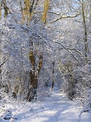 Winter woodland (yvonnepay615) Tags: uk winter snow nature woodland lumix norfolk panasonic 45mm eastanglia gh3 sooc platinumheartaward