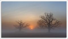 Great Swamp National Wildlife Refuge (richpope) Tags: tree fog sunrise newjersey nj swamp nationalgeographic greatswamp greatswampnationalwildliferefuge