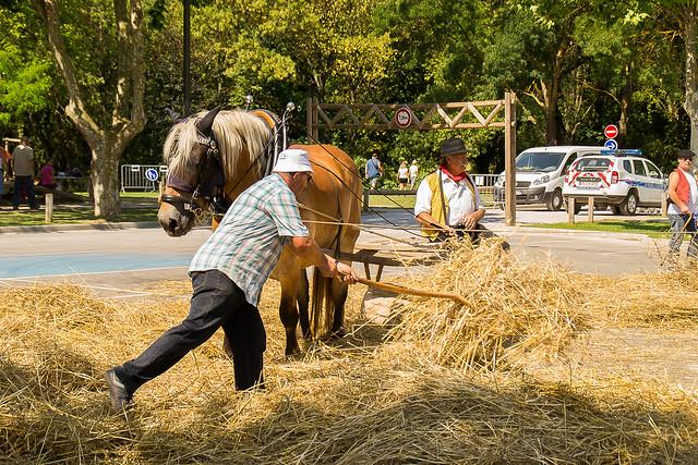IXème Fête du Pont - Le foulage du blé