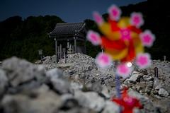 0212 (Shota Fukuda) Tags: japan    temple