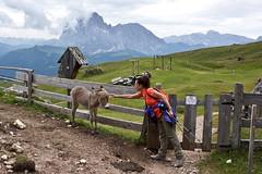 Piccino piccino (Franco Vannini) Tags: dolomiti dolomites odles sassrigais fermeda seceda valgardena valdifunes odle pieralongia somarello donkey asinello