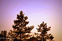 Crescent Moon (Yummilicious Cakes & Desserts) Tags: crescent moon sunset nature mjesec priroda zalazak sunca photography colors beauty