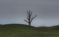 tree (Raikyn) Tags: hawkesbay nz newzealand landscape farm rural winter