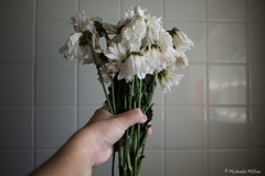 Beauty in Death (MichaelaSMillion) Tags: death dead die dying flower flowers morbid plant plants pretty beauty beautiful white droop drooping tile wall bathroom shower hand hold holding arm bouquet daisy daisies wilt wilting wilted light