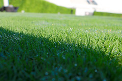 IMG_9733 (UGA College of Ag & Environmental Sciences - OCCS) Tags: grass turfgrass tiff419 419 sanfordstadium privet hedge hedges scoreboard